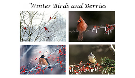 Birds and Berries card set